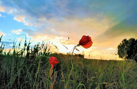 Belgische Ardennen  - Foto 1